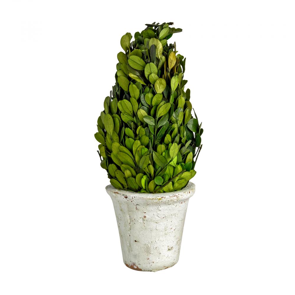 Декоративный цветок Самшит Большой