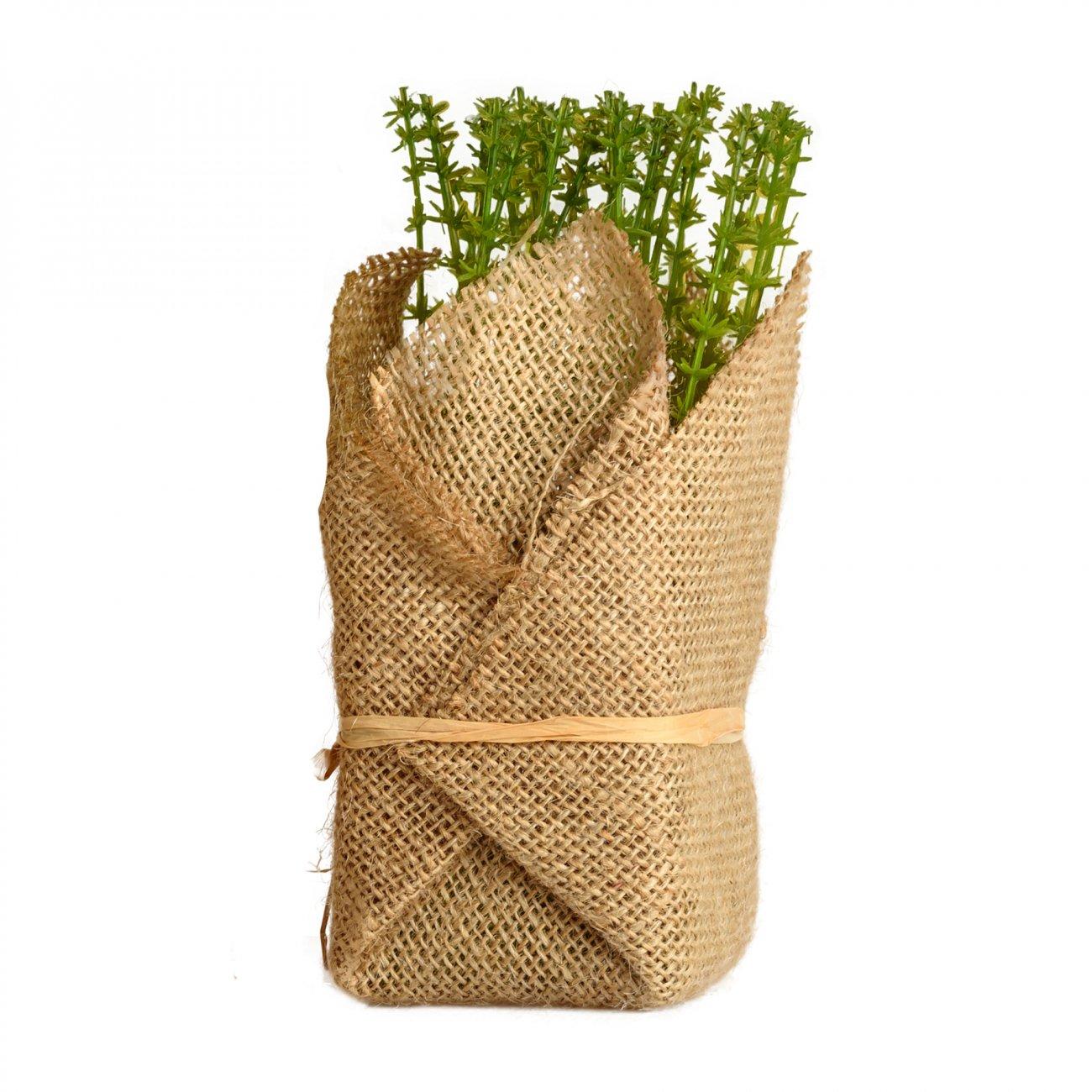 Купить Растение декоративное Potted Herb Polini в интернет магазине дизайнерской мебели и аксессуаров для дома и дачи