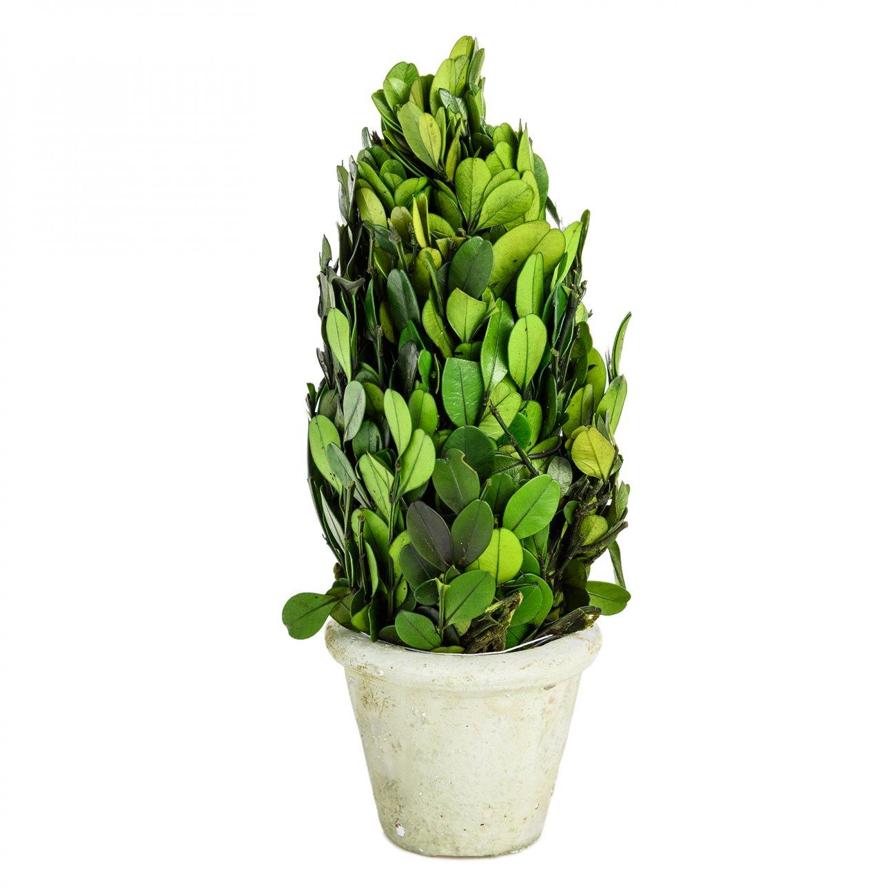Купить Декоративный цветок Самшит Маленький в интернет магазине дизайнерской мебели и аксессуаров для дома и дачи